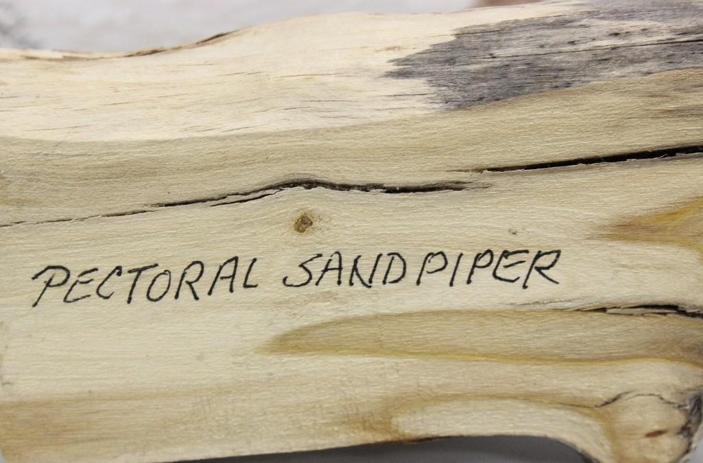 Pectoral Sandpiper- Dave Rhodes - 4