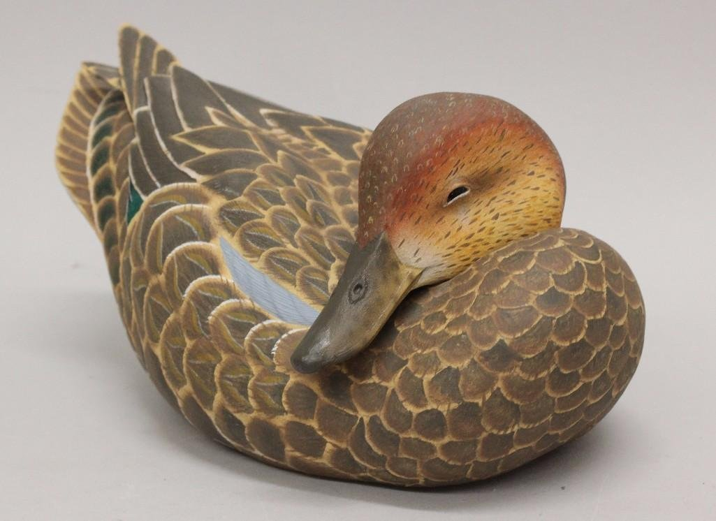 Resting blue wing teal