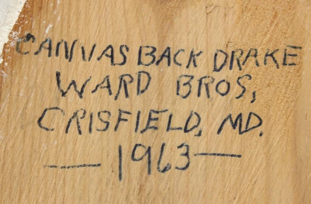 Canvasback Drake- Ward Brothers - 3
