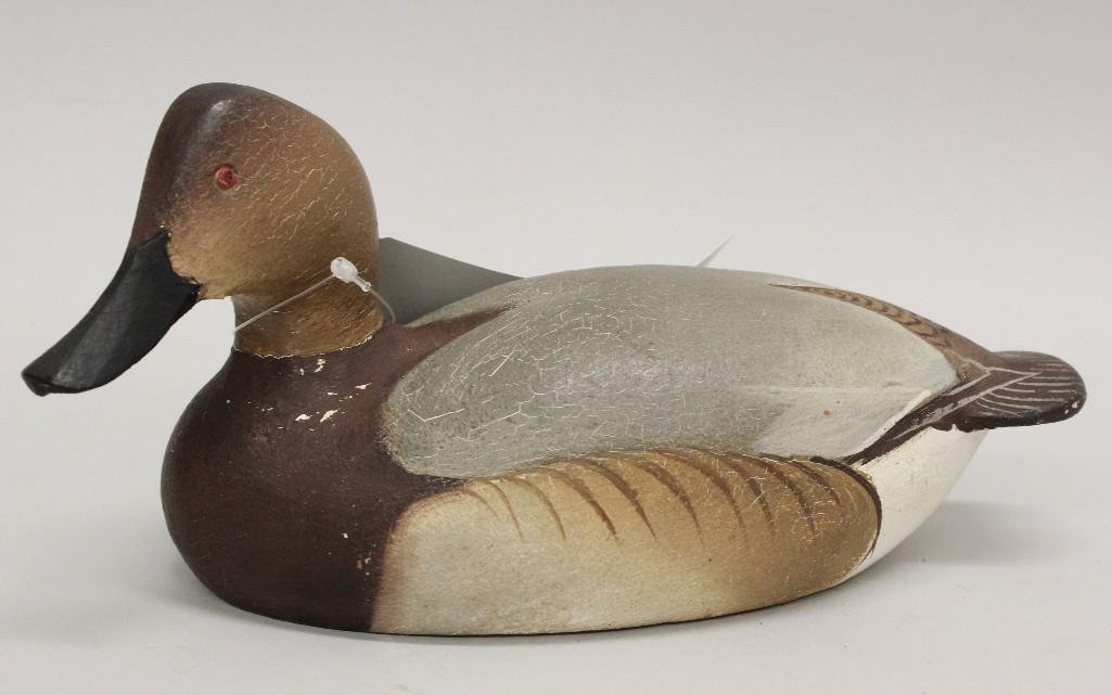 Canvasback Hen- Ward Brothers - 2