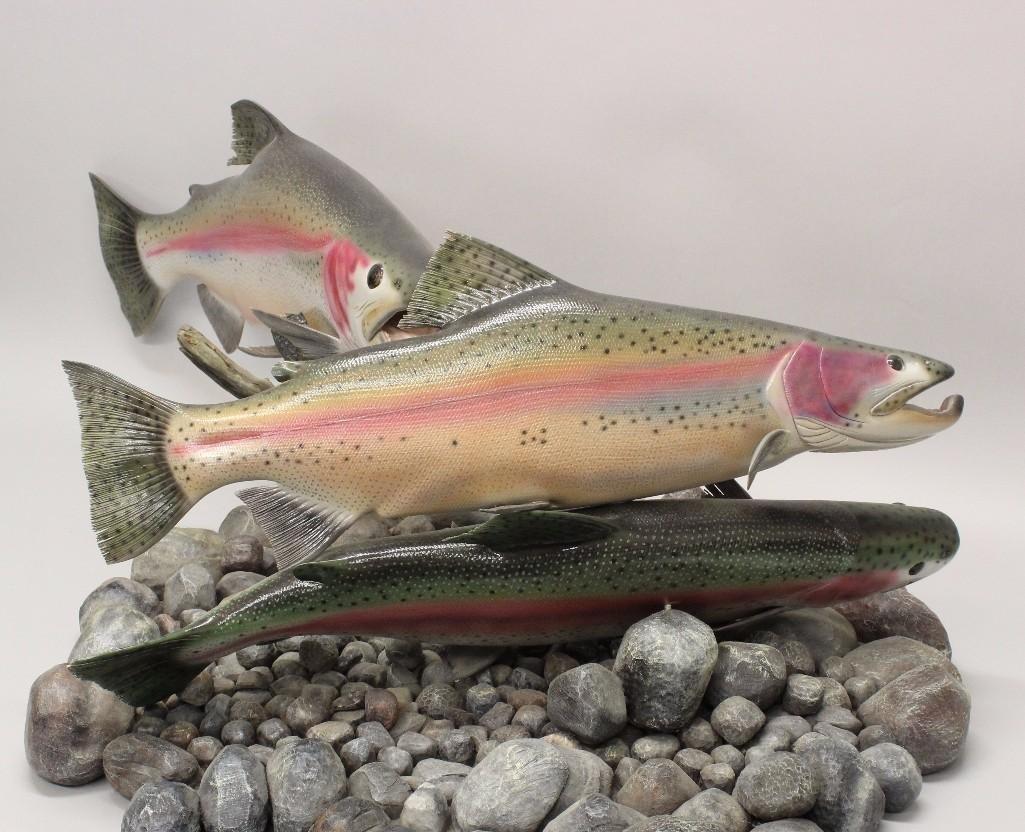 Rainbow Trout (finning)