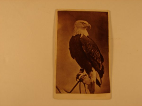 514: CDV OF OLD ABE THE WAR EAGLE