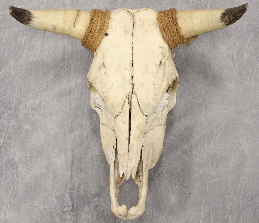 Steer Skull Roped Horns