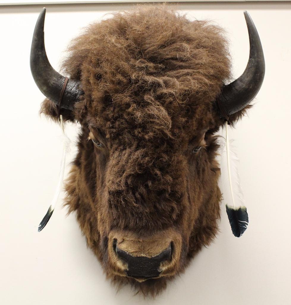 Buffalo Shoulder Mount