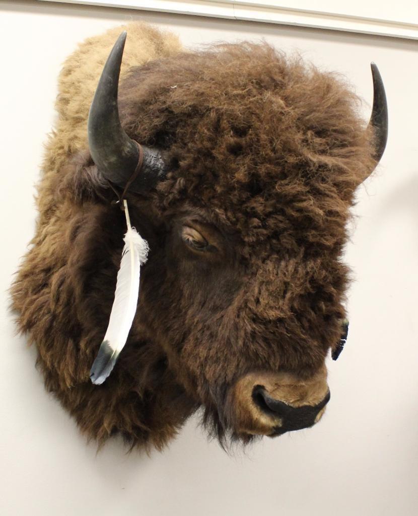 Buffalo Shoulder Mount - 3
