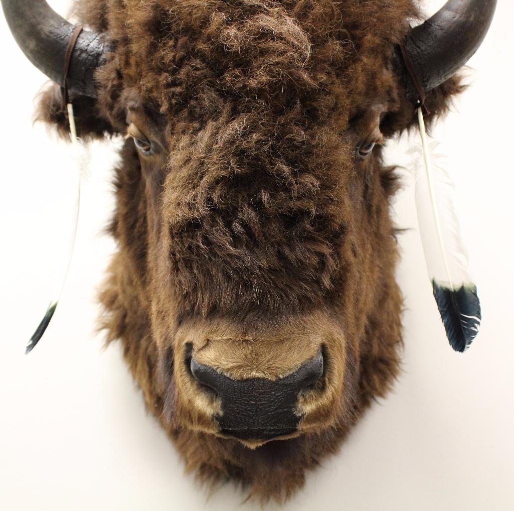 Buffalo Shoulder Mount - 4