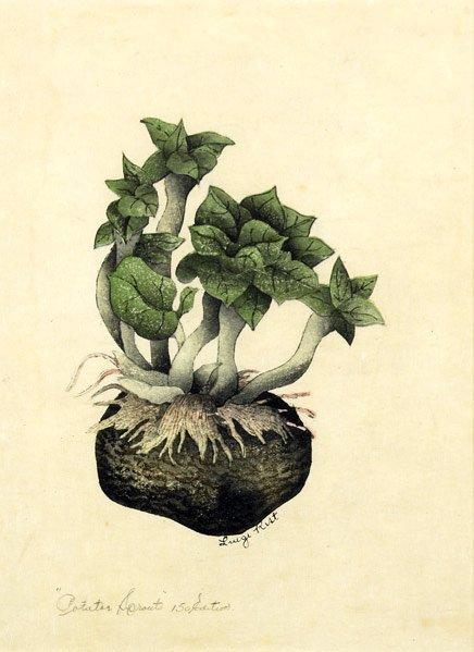 16: Luigi Rist (American, 1888-1959) Potato Sprouts