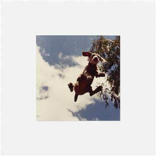 William Wegman, Flying Puppy