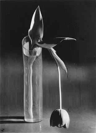 559: Andre Kertesz (Hungarian/American, 1894-1985) Mela