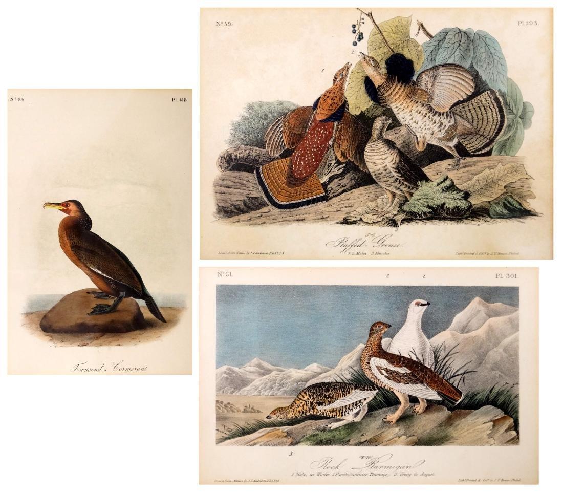 JOHN J. AUDUBON (AMERICAN 1785-1851), LOT (3)