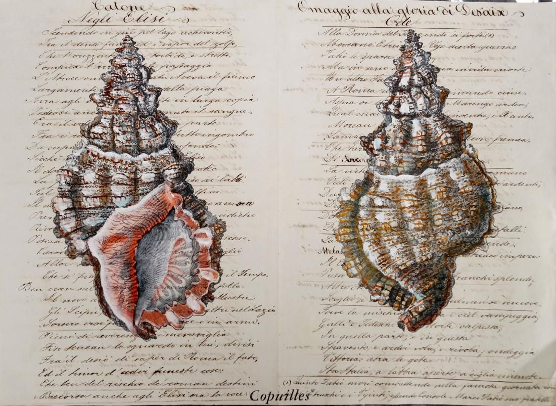 HAND COLORED ENGRAVING OF COQUILLES ON 18TH CENTURY