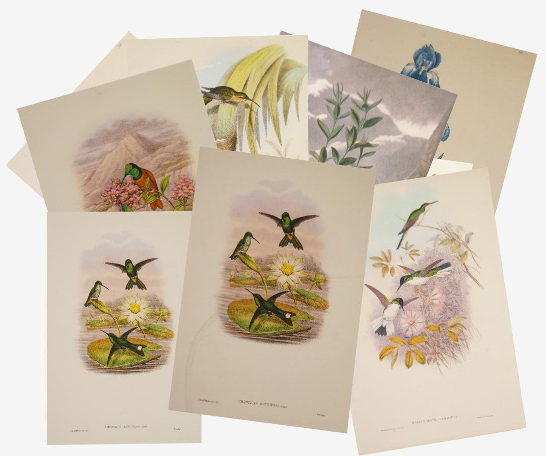 LOT (9) PRINTS INCLUDING HUMMINGBIRDS AFTER JOHN GOULD