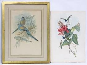 Lot (2) John Gould (british 1804-1881) Including Hand