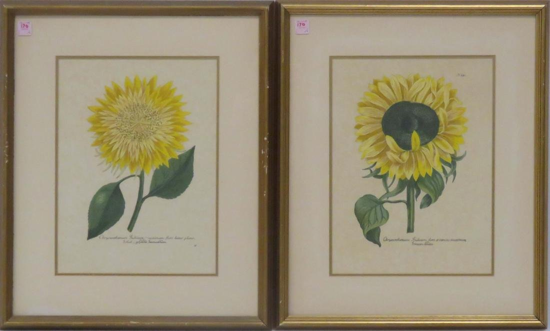 PAIR BOTANICAL COLORED LITHOGRAPHS, SUNFLOWERS. FRAMED
