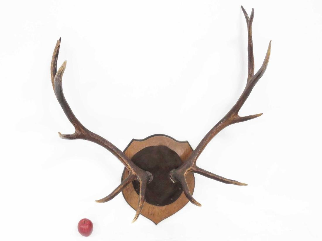 "11-POINT ELK ANTLERS ON PLAQUE. HEIGHT 42""; WIDTH 38"""