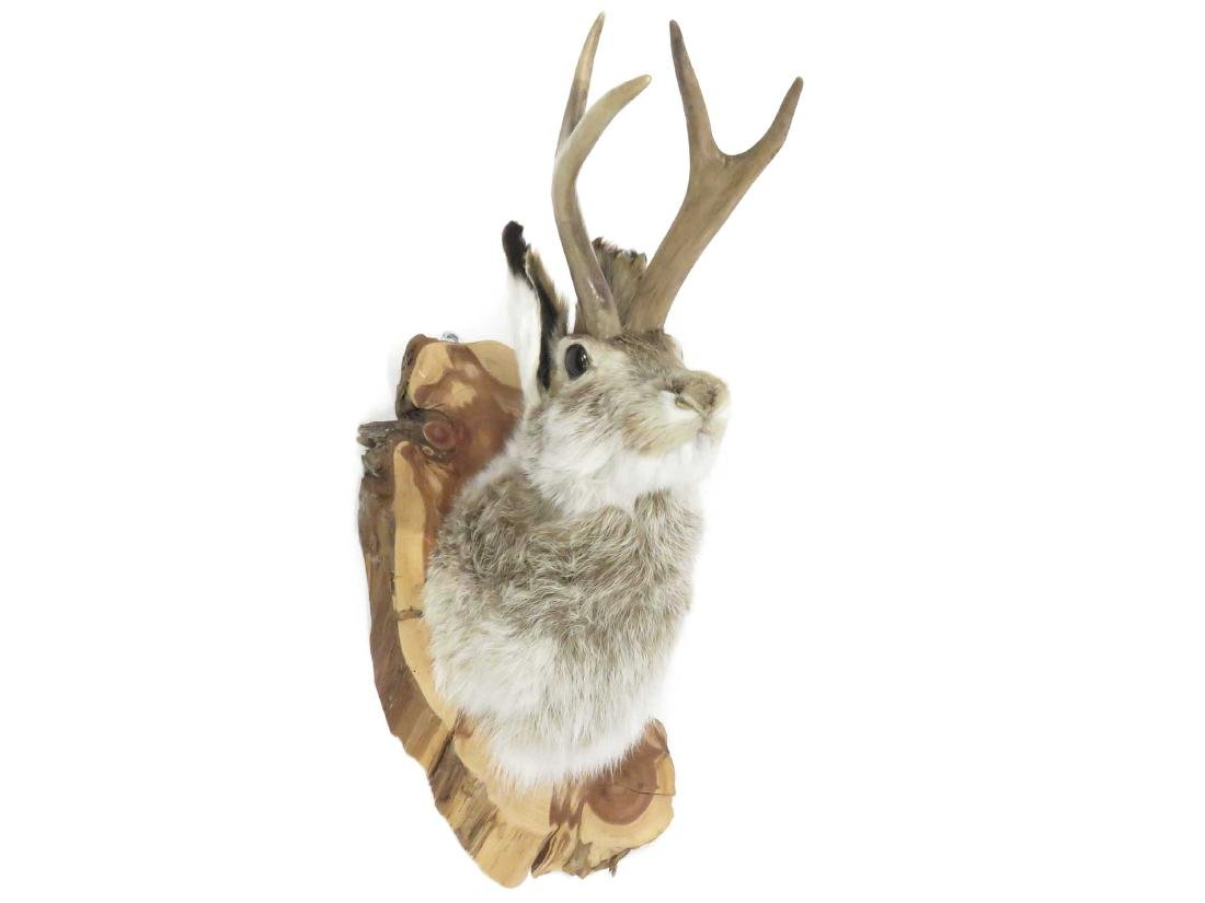 JACKALOPE TROPHY MOUNT. HEIGHT 18""