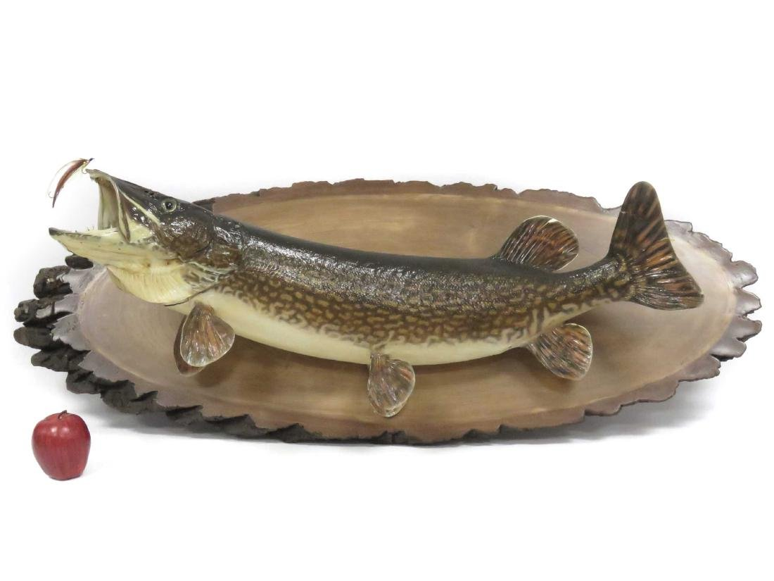 NORTHERN PIKE WALL MOUNT. LENGTH 45""