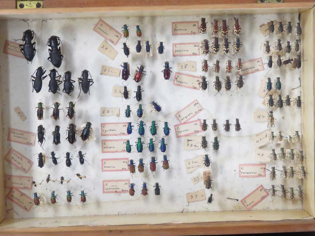 LOT (2) VINTAGE COLLECTOR BOXES, ENTOMOLOGY. HEIGHT 2 - 2