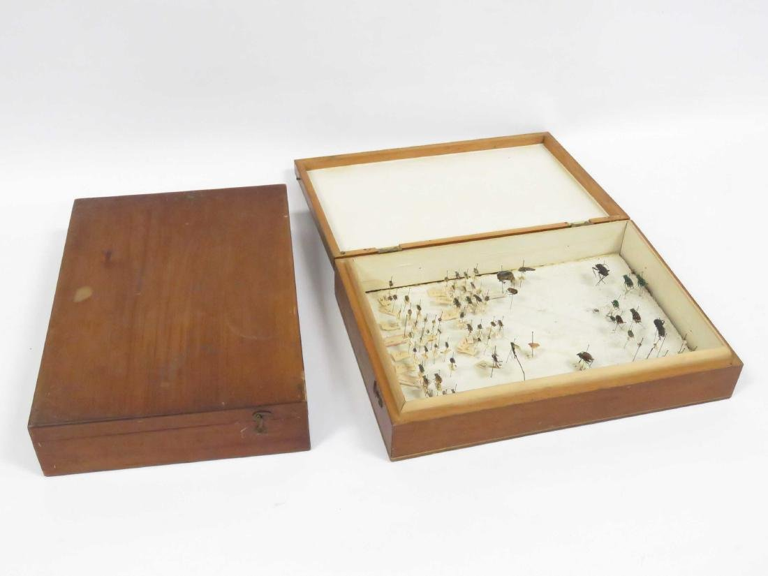 LOT (2) VINTAGE COLLECTOR BOXES, ENTOMOLOGY. HEIGHT 2 - 4