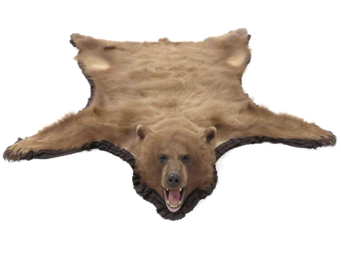 BROWN BEAR SKIN RUG WITH HEAD AND CLAWS. 84 X 70""