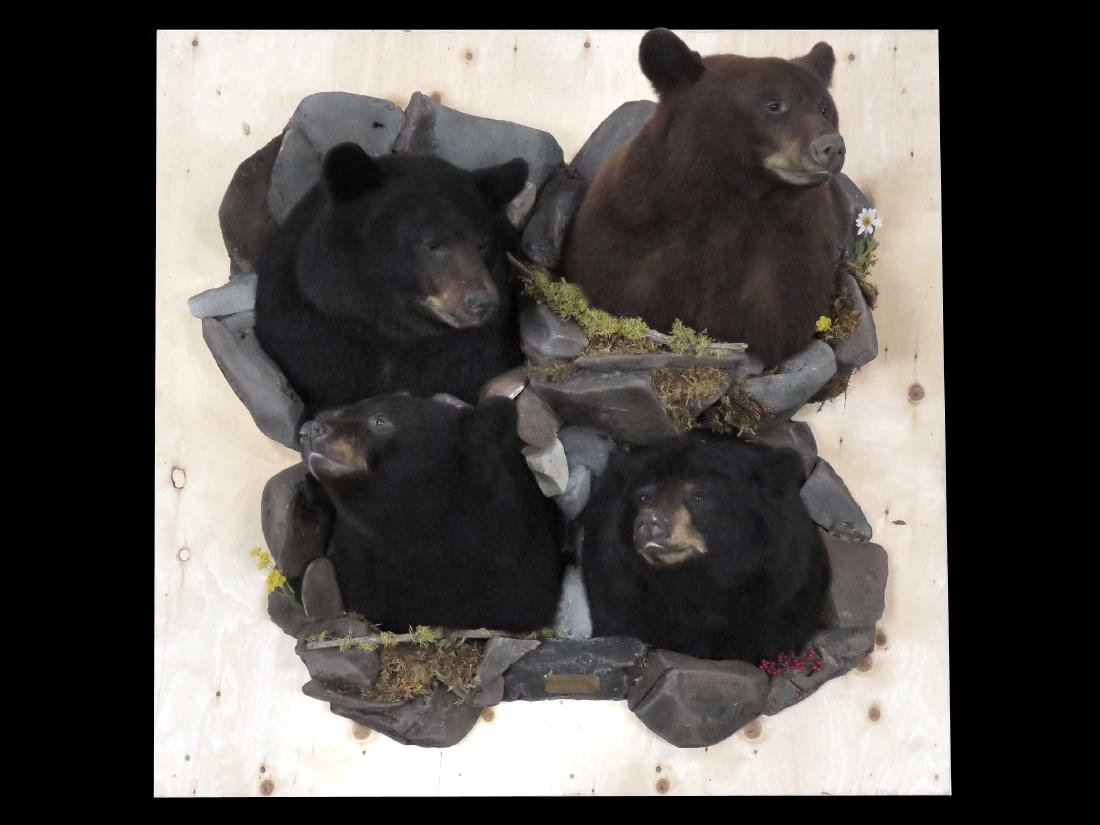"LOT (4) BROWN & BLACK BEAR TROPHY HEAD MOUNTS ""FATHER &"