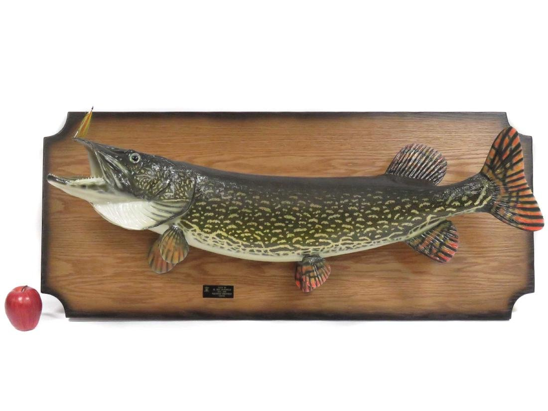 NORTHERN PIKE FULL BODY TROPHY MOUNT WITH FLY. LENGTH