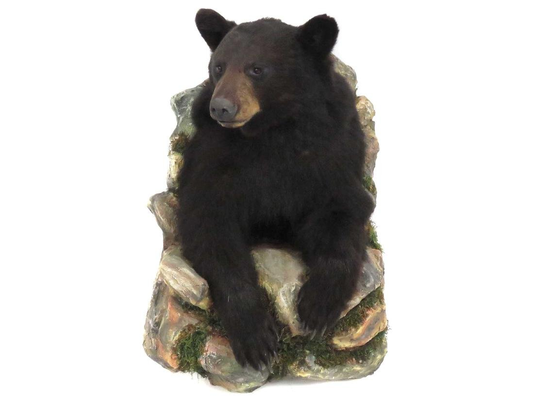 BLACK BEAR WALL MOUNT TROPHY MOUNT WITH ROCKY OUTCROP.