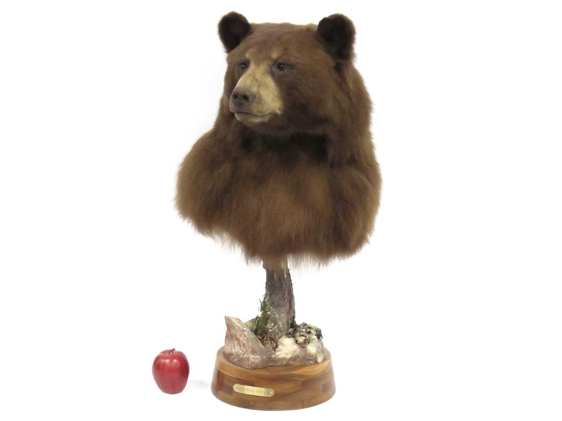 BROWN BEAR TROPHY MOUNT, SIGNED PARSONS WILDLIFE