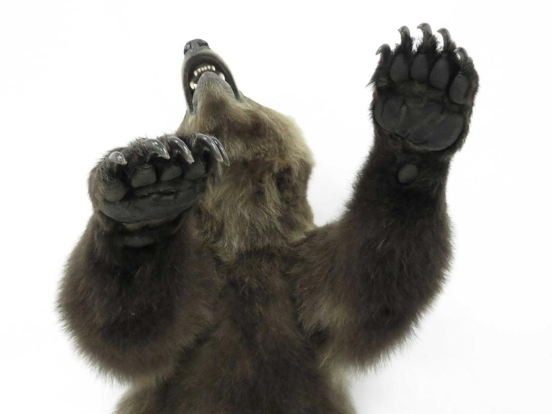 RUSSIAN BROWN BEAR TORSO TROPHY WALL MOUNT WITH FRONT - 3