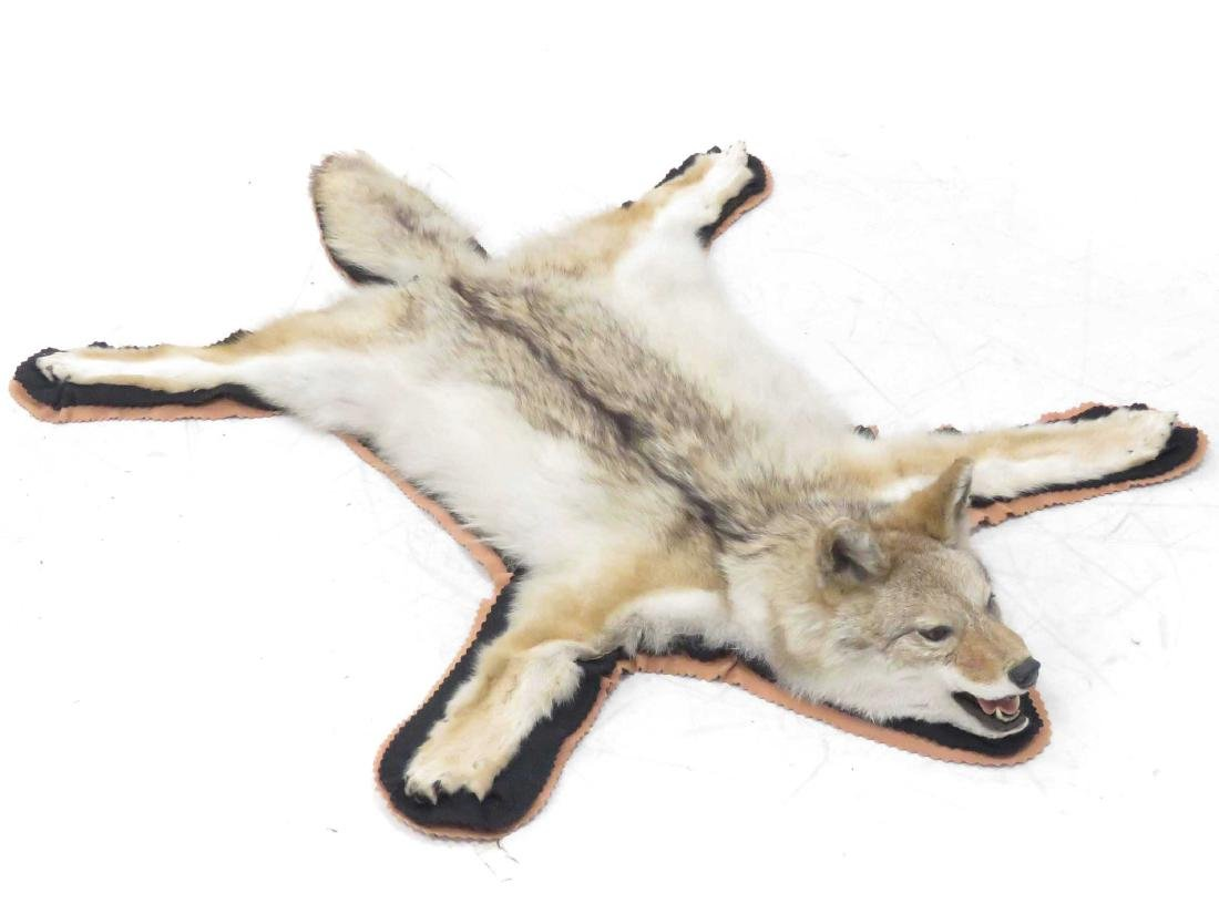COYOTE RUG WITH HEAD. 55 X 54""