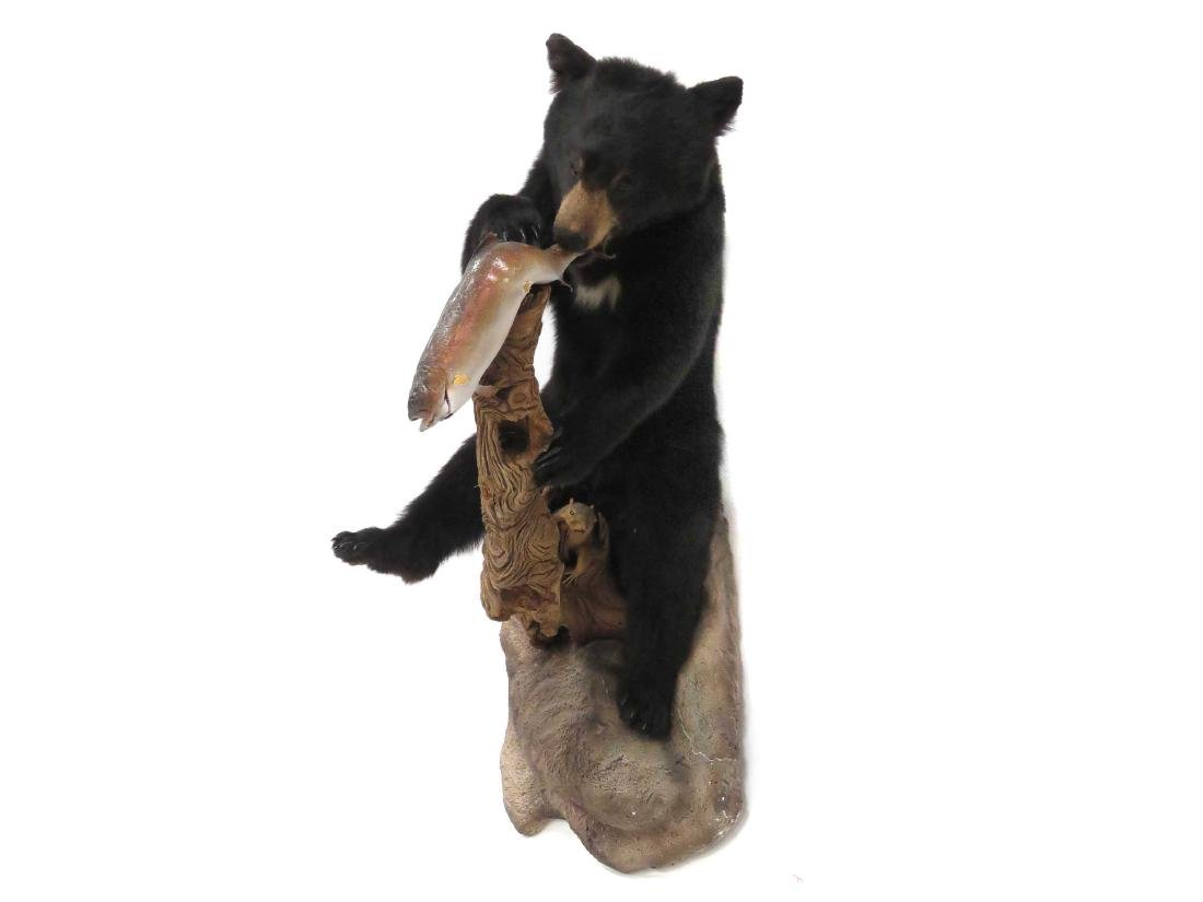 BLACK BEAR WITH FISH FULL BODY TROPHY WALL MOUNT.