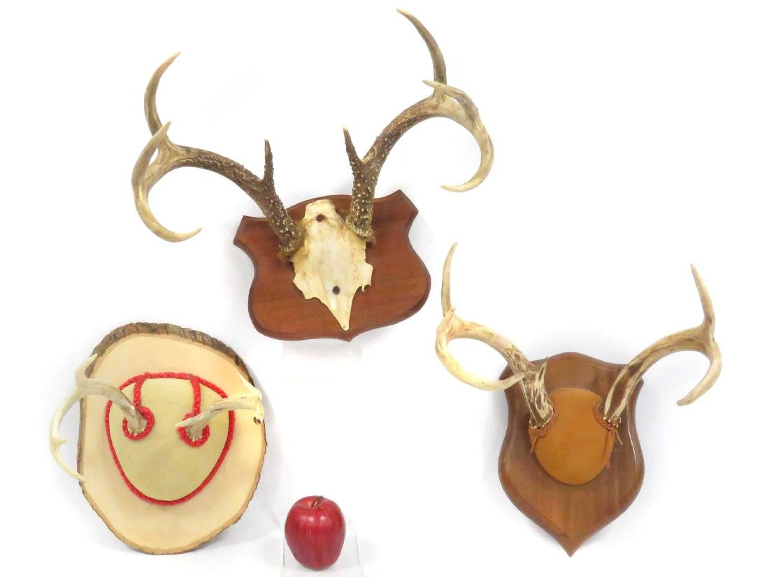 LOT (3) DEER ANTLER TROPHY WALL MOUNTS (6 & 7PT)
