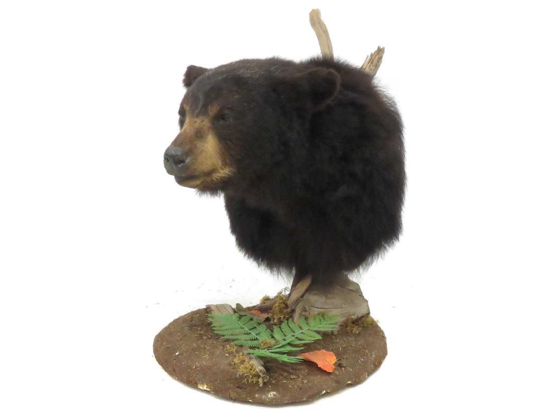 BLACK BEAR TROPHY HEAD MOUNT WITH FLOOR MOUNT. HEIGHT