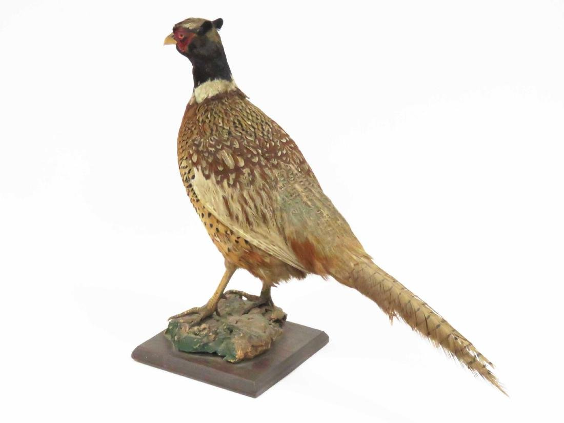 "STANDING RING NECK PHEASANT ON WOOD BASE. HEIGHT 17""; - 2"