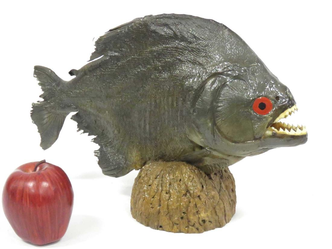 "PIRANHA FISH FULL BODY MOUNT. LENGTH 14 1/2"""