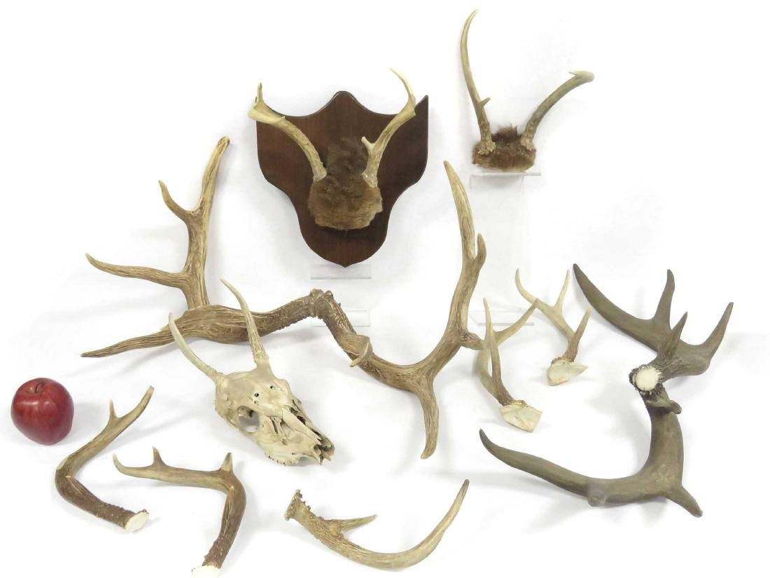 LOT ASSORTED ANTLERS AND DEER SKULL