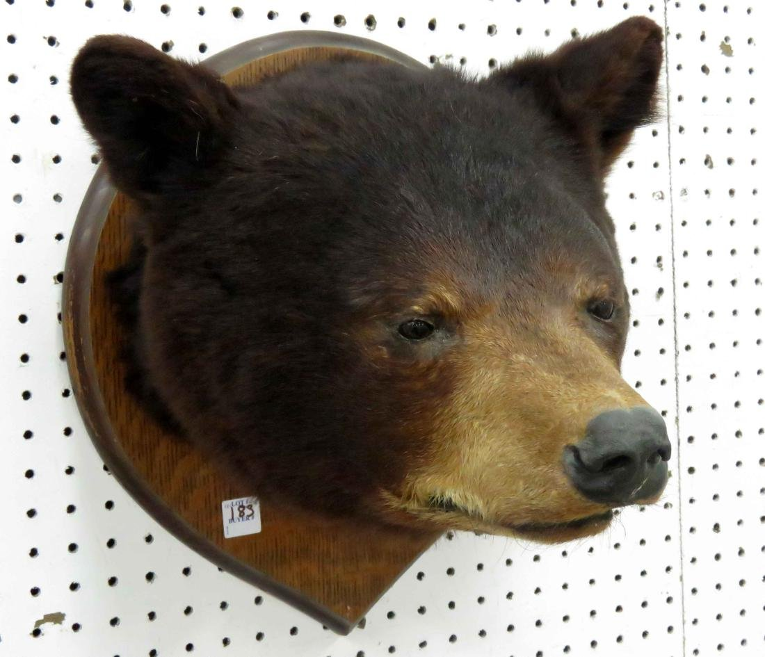 BEAR HEAD. MOUTH CLOSED
