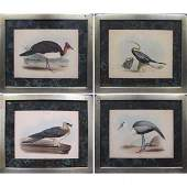 747 LOT 4 HAND COLORED AVIARY LITHOGRAPHS