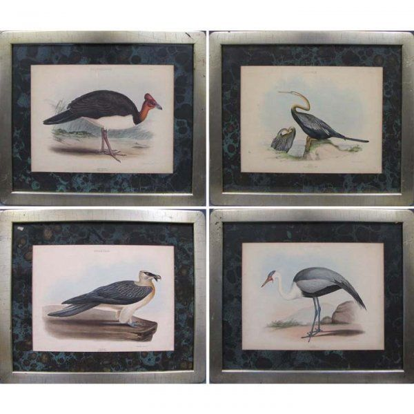 747: LOT (4) HAND COLORED AVIARY LITHOGRAPHS