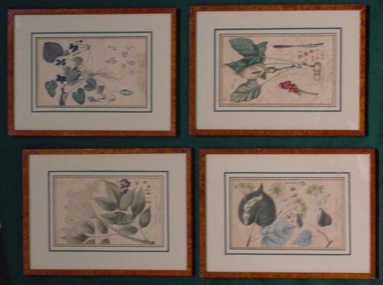 1151: LOT (4) HAND COLORED BOTANICAL ENGRAVINGS