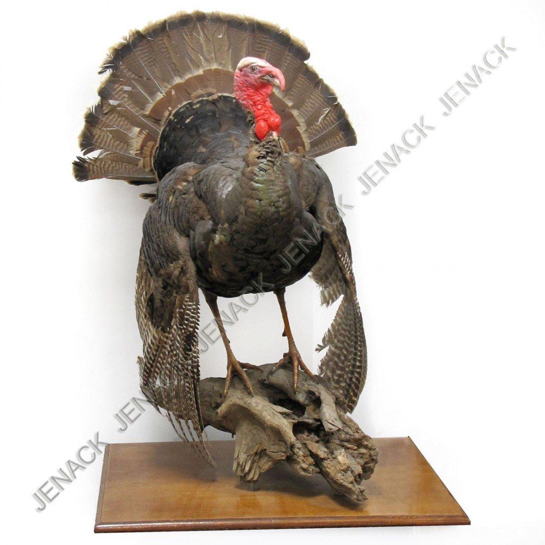4: VINTAGE AMERICAN WILD TURKEY FULL BODY MOUNT