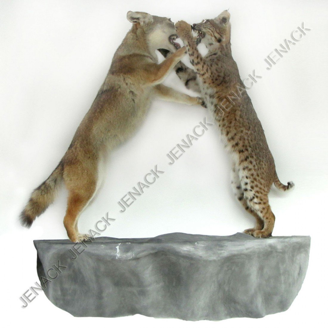 104: VINTAGE BOBCAT AND COYOTE WALL FULL BODY MOUNT