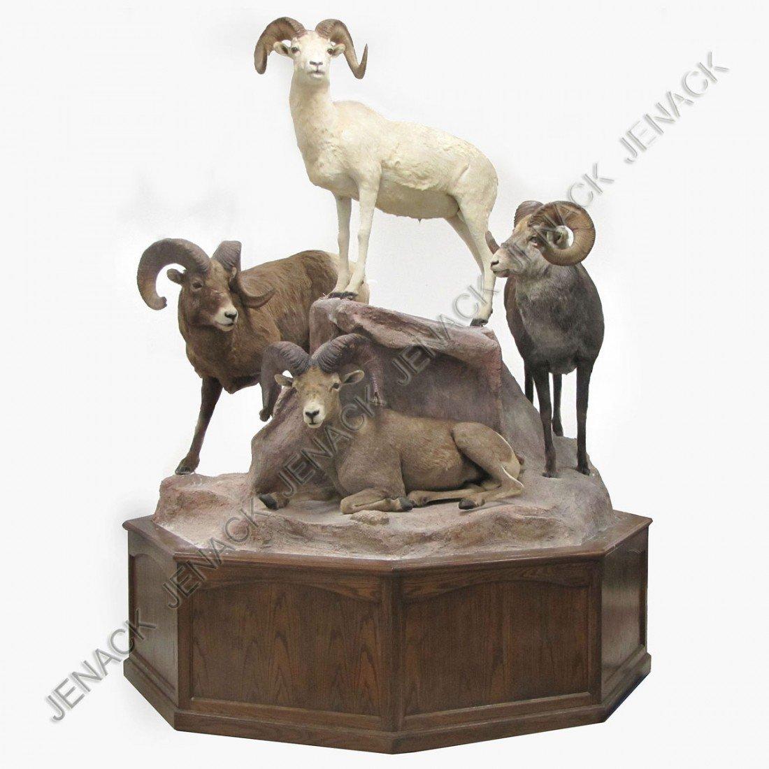 147: RARE GRAND SLAM MOUNT, BIG HORN SHEEP