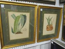 LOT 2 HAND COLORED LITHOGRAPHS FERNS