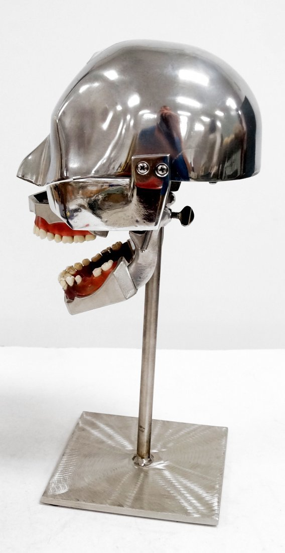 "COLUMBIA PHANTOM DENTAL MANNEQUIN FORM. HEIGHT 15"" - 2"