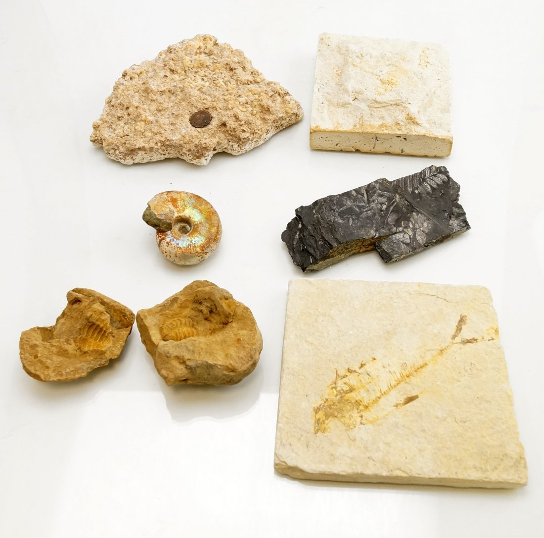LOT INCLUDING ASSORTED FOSSILS; PIECE GETTY CENTER, LA,