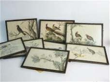 Eight Chinese pith paper ornithological pictures, mid 1