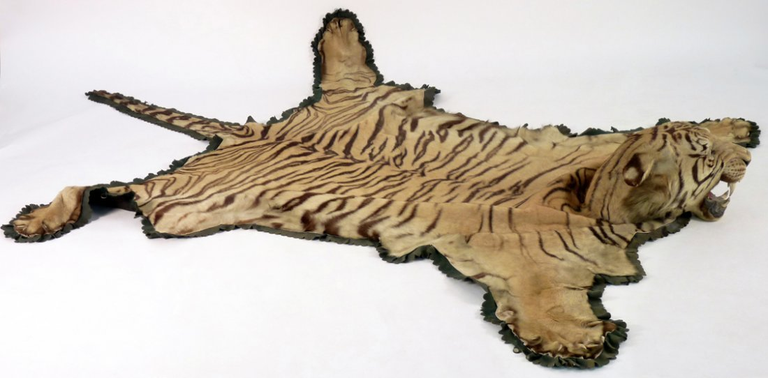A tiger skin with head mount, early 20th century, mount