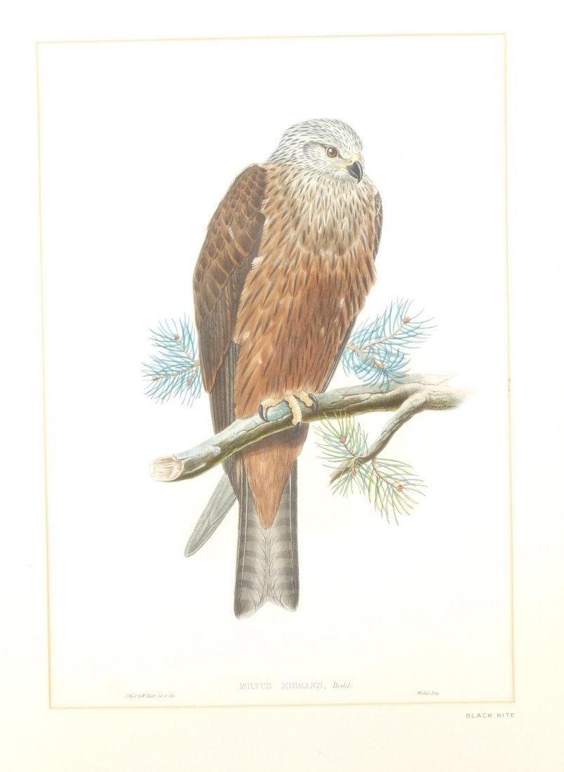 J Gould and H C Richter,  eight ornithological lithogra