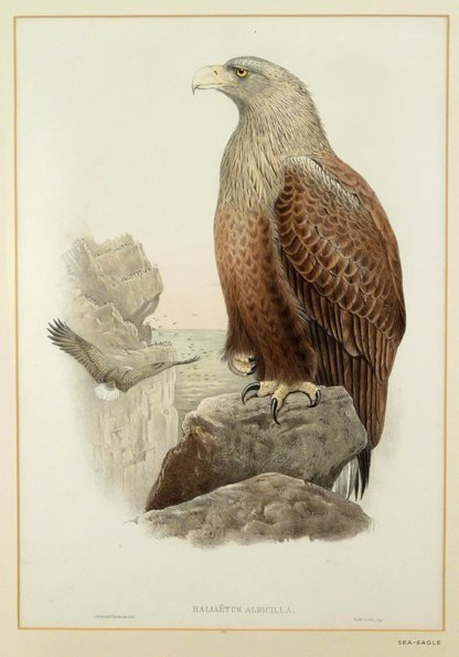 J Gould and H C Richter, ten ornithological lithographi